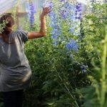 Grow at Home Garden - caroline plouff