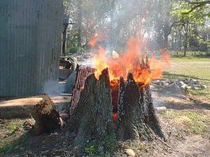 Burning the stump - Arboriculture Services