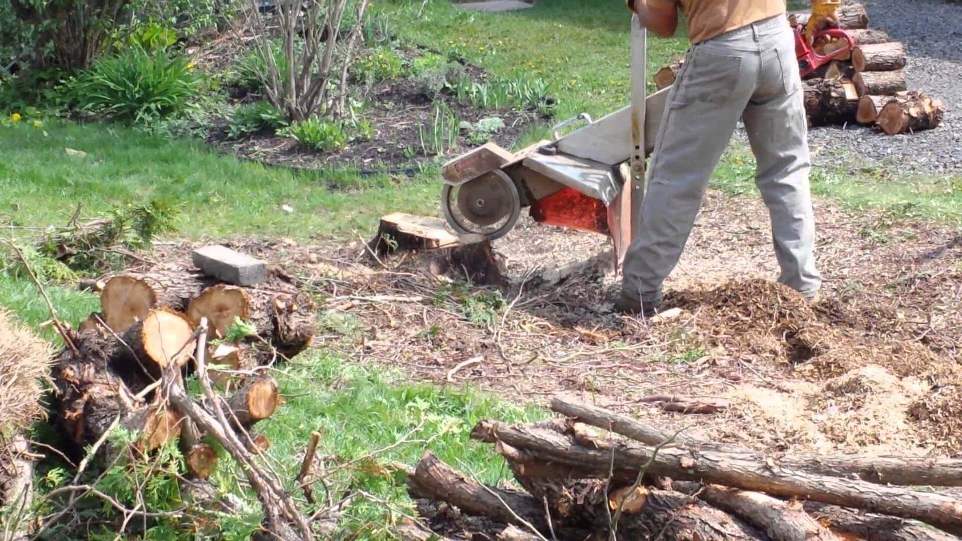 Tips How to Remove a Tree Stump Arboriculture Services