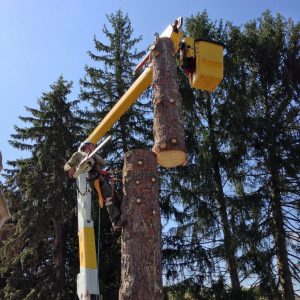 Tree Cutting & Removal Equipment - Arboriculture Services