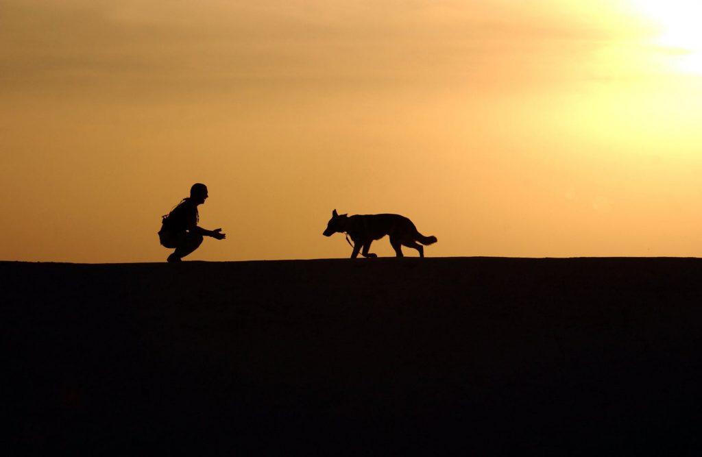 Good Dog Trainer stephanie taunton