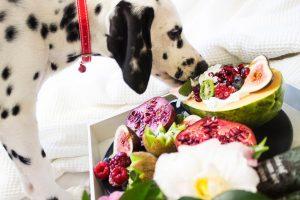 Dog's Diet - Stephanie Taunton