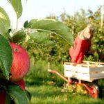 Fruit picking jobs