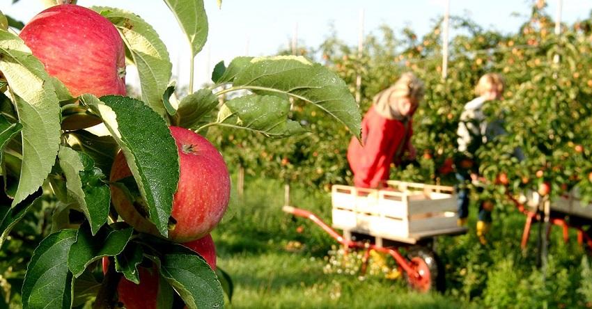 Fruit picking jobs