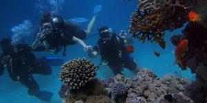 Parag Fatehpuria - Scuba Diving - Snorkeling