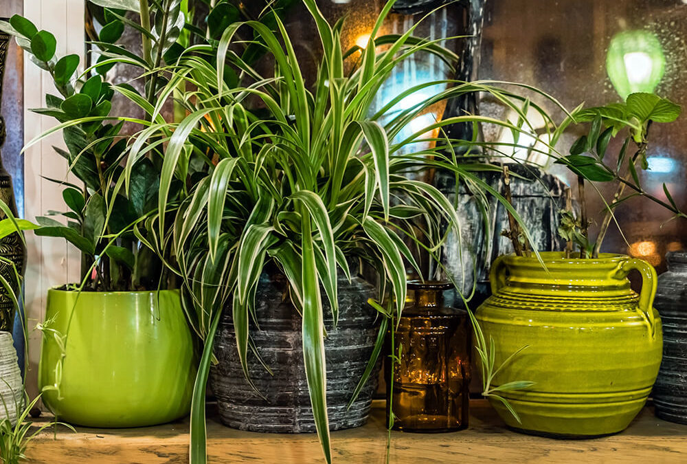 air plant - plantgrowpick