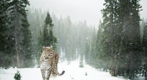 Parag Fatehpuria - Snow Leopard Trek