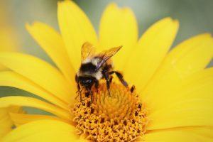 bees worldwide