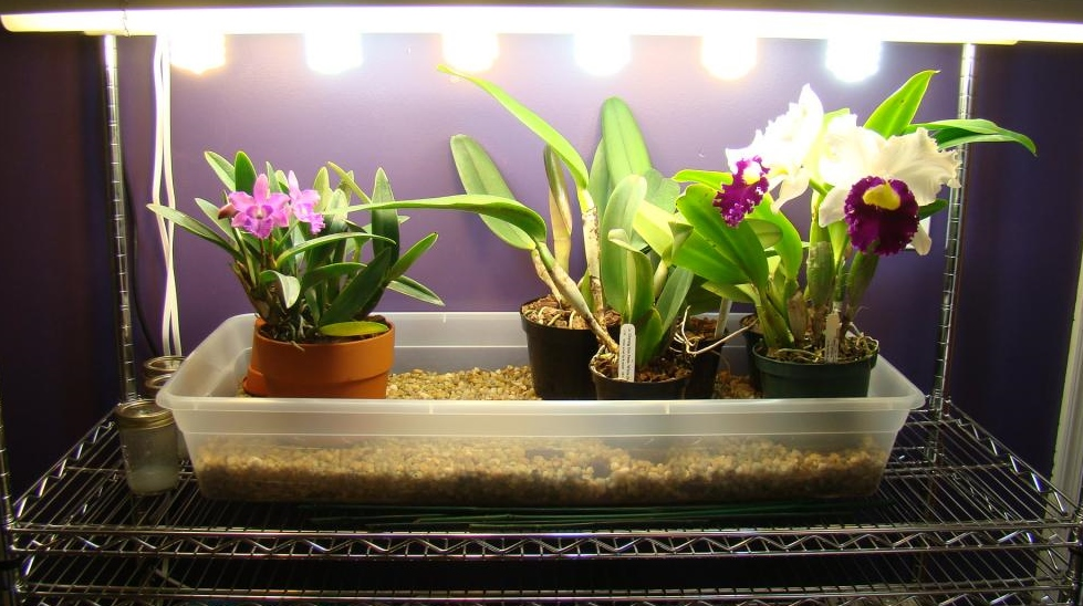 Indoor Grower