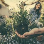 plantgrowpick -Gardening Tips for Beginners