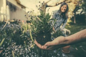 plantgrowpick -Gardening Tips for Beginners