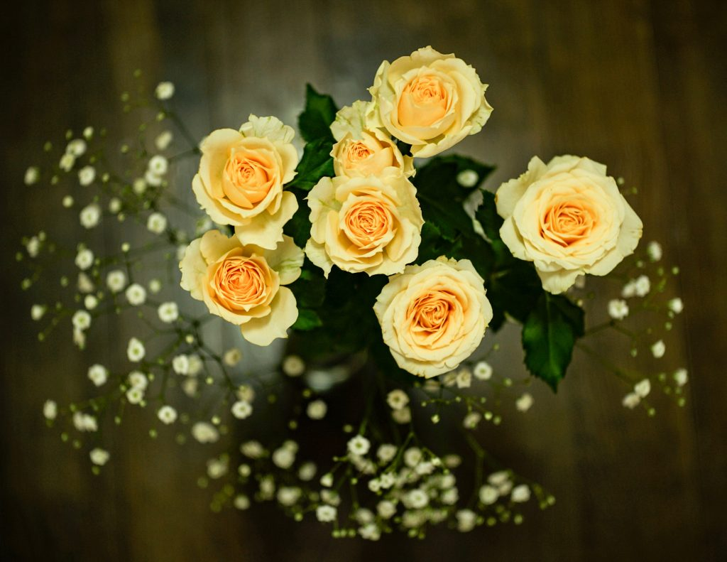 Plantgrowpick - Rose