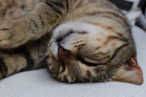 reason for cat sleeping