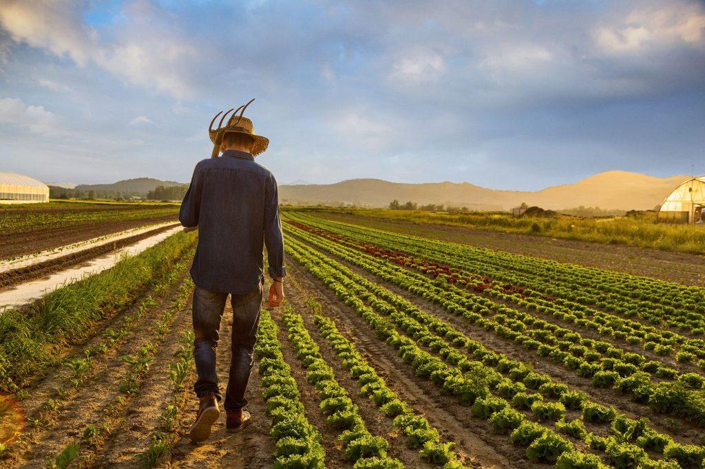 crop-farmer