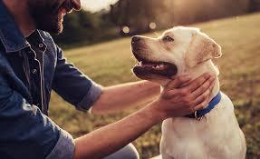 Caring Pet