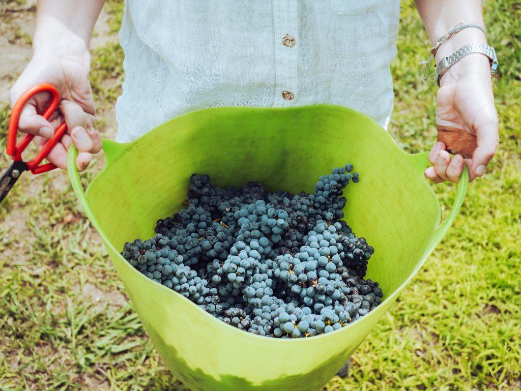 grape things
