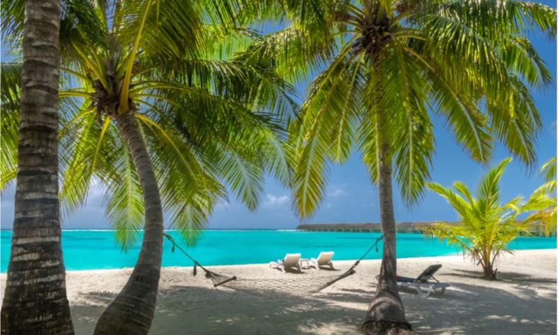 vacation on palm beach