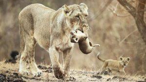 Mayur Rele Wild Photographer