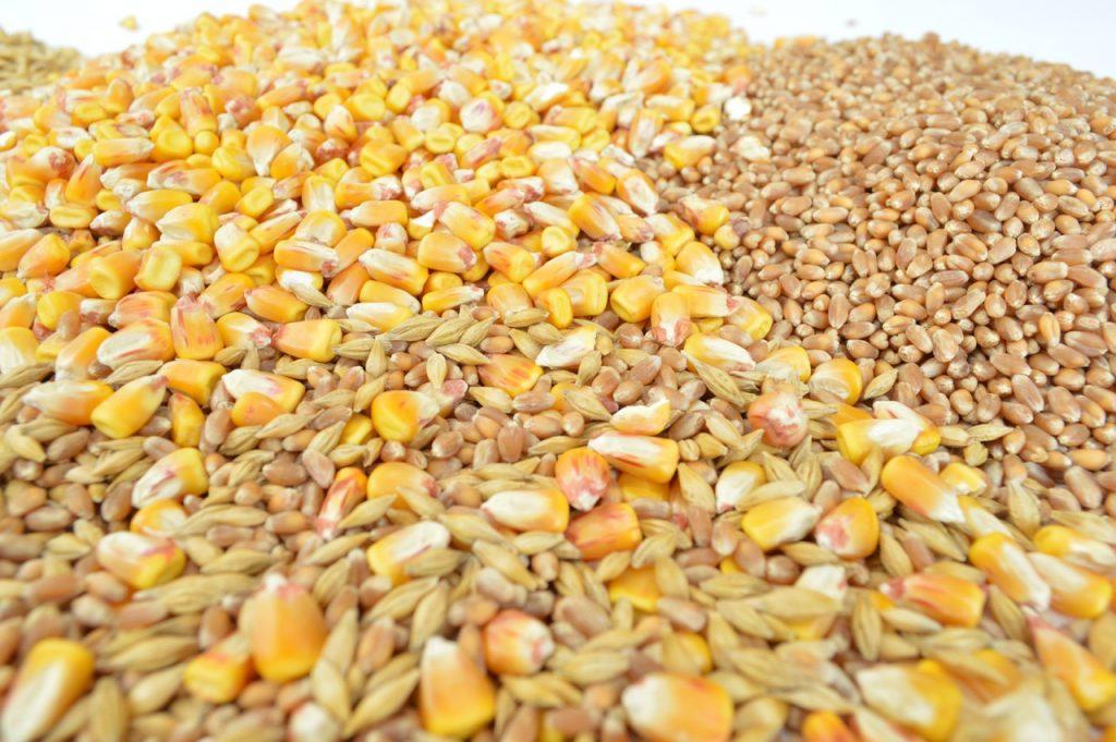 Rowan Relton - Grain Markets